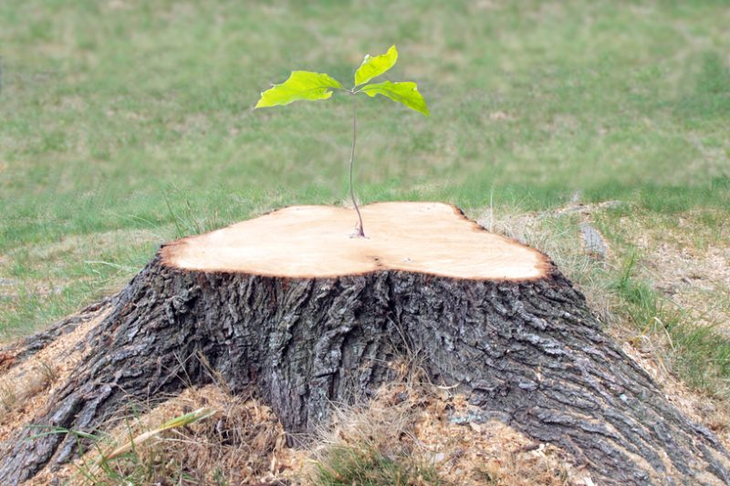 Remove Tree Roots Safely