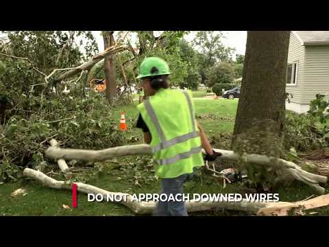 Dos And Dont's Of Tree Care