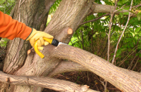 Tree Service Scams