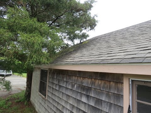 tree-fall-in-roof